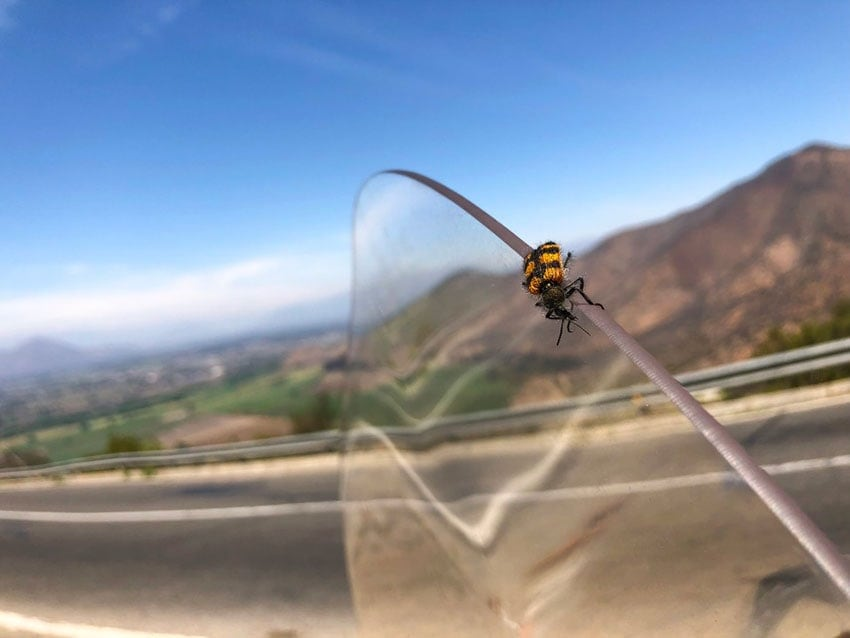bug on the motorcycle windshield